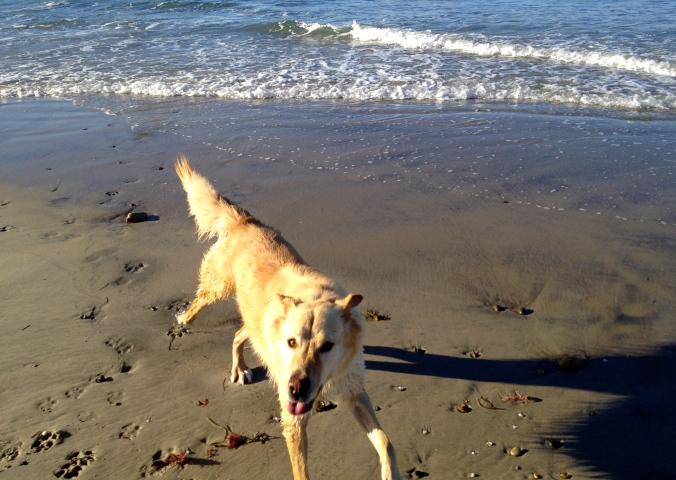 Play! - Dog Beach/Del Mar - March, 2015