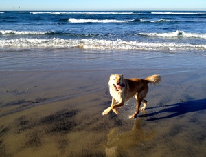 Rita at Dog Beach/Del Mar - March 7, 2015