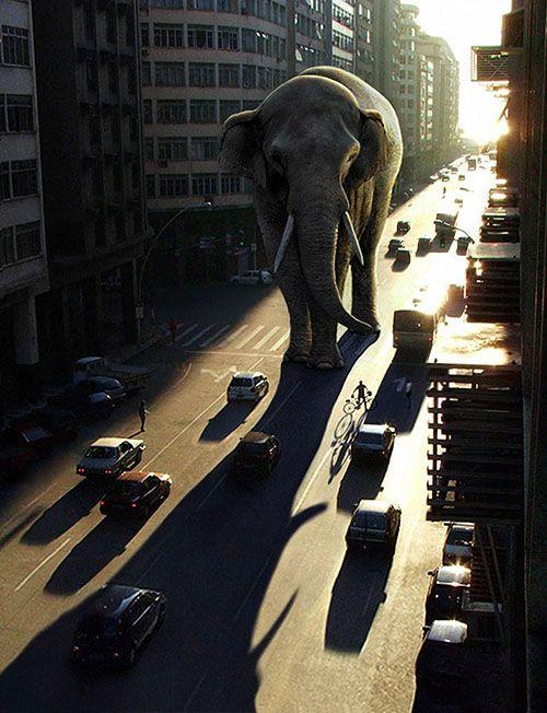 elephant-city