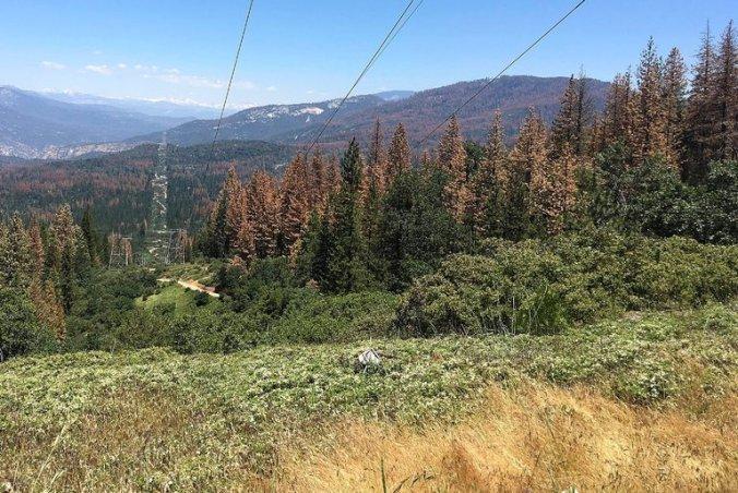 CA Dead Trees